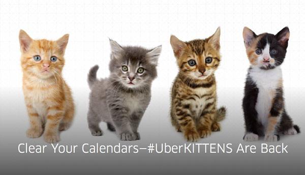 uber-kittens-returns