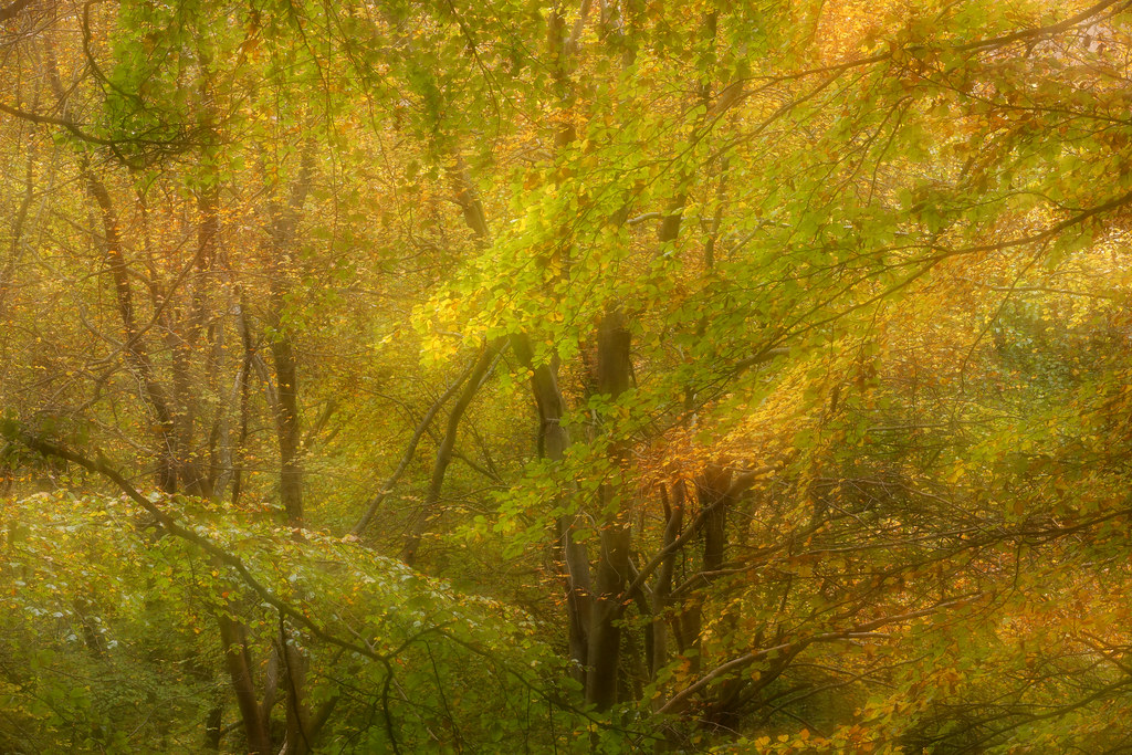 Autumn Forest Impression