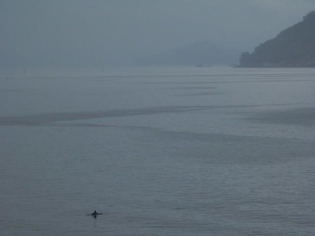 Un delfín frente a casa