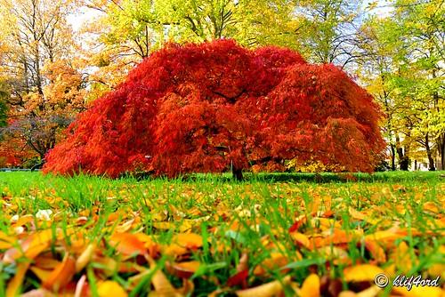 trees tell the seasons