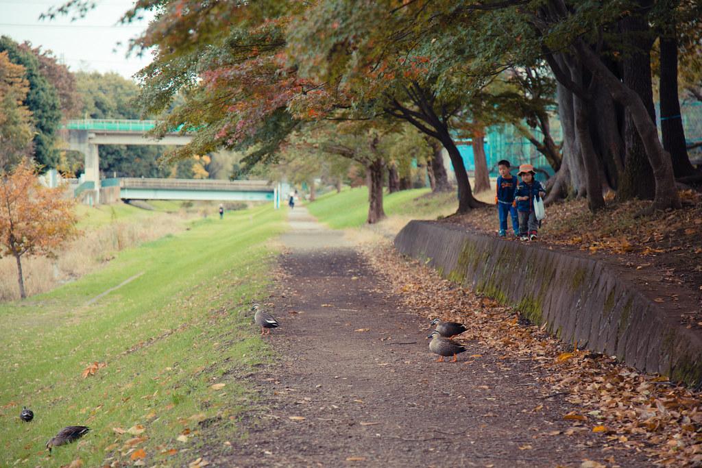 2015-11-11 武蔵野公園 001