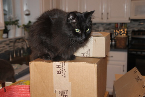 Cosmo Enjoying the Boxes from B&H Photo