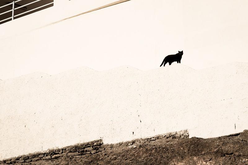 Black cat minimalism