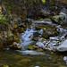 Roadside Mountain Stream by ritchey.jj