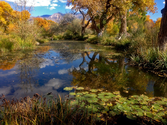 Shady Lakes - water lily gardens and trout fishing.  Albuquerque North Valley.  Sandia Mts. in the background.  New Mexico, USA.