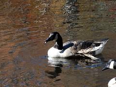 Mill Pond Park -- Autumn (42)