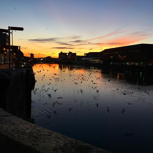 Sunrise over the River Lee and city marina in Cork city with a very lovely flock of seagulls. #sunrise #ig_ireland #hellocork_ #morning #goodmorningcork #bridge #river #riverlee #icantbelieveimupthisearly #flockofseagulls #seagulls #nofilterneeded #nofilt