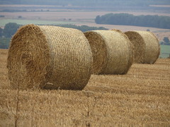 Bales on Saxby Wold