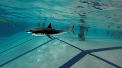 A shark in our pool