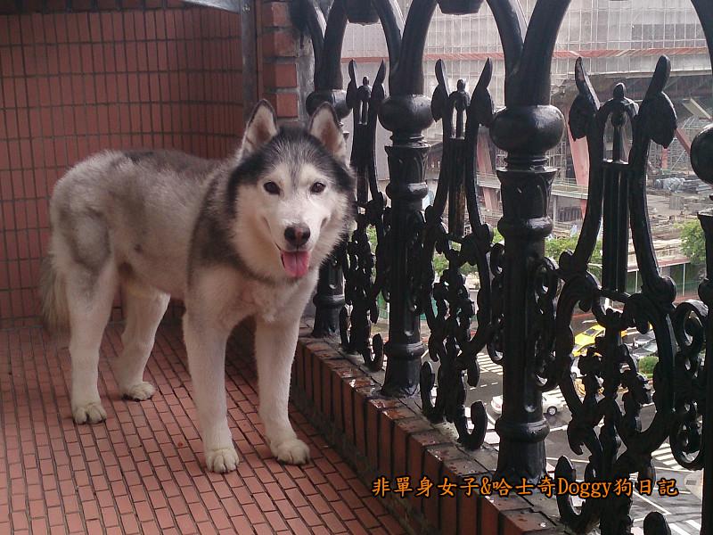 Doggy颱風17