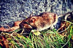 #ratsrule #zef #dead #fuckbitches #getmoney #nikon #nikontop #nikonphotography #nature #naturelovers #SuicideBlackMetal