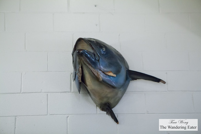 Large fish head mounted on the wall