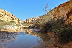 desert reflexion