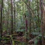 Natural Tasmania