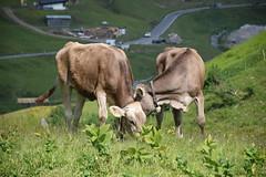 South Tyrol, Austria
