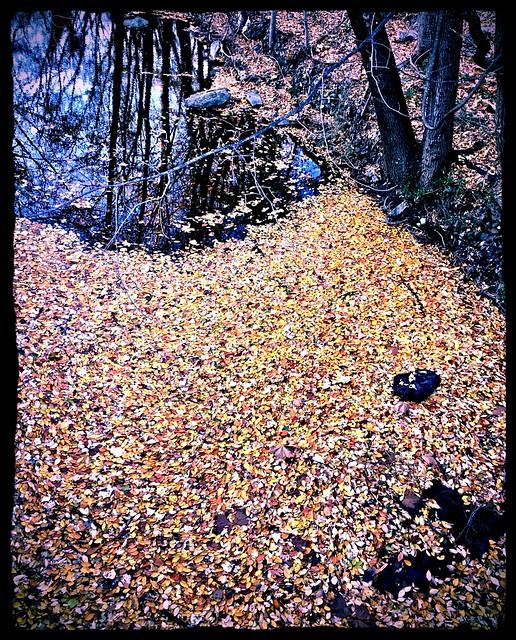 floating Fall ~ HTT!
