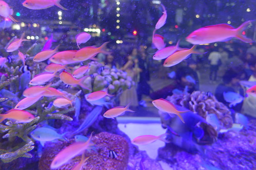 48th Sony Aquarium at Ginza 2015-01