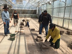 BLM Idaho Partners with Shoshone-Paiute Tribe to Grow Native Plants for Sage-Steppe Restoration