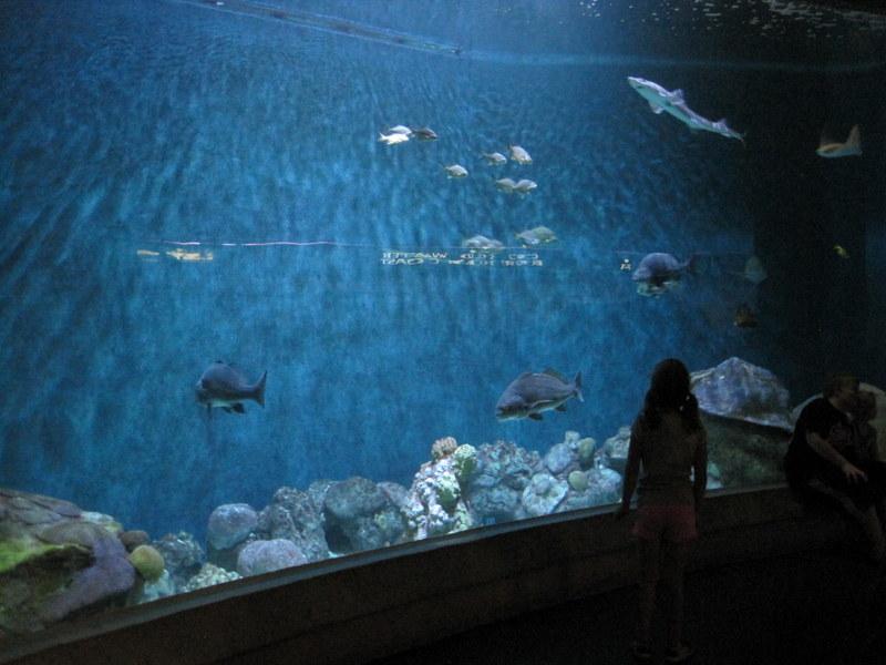 Museum Aquarium (15)