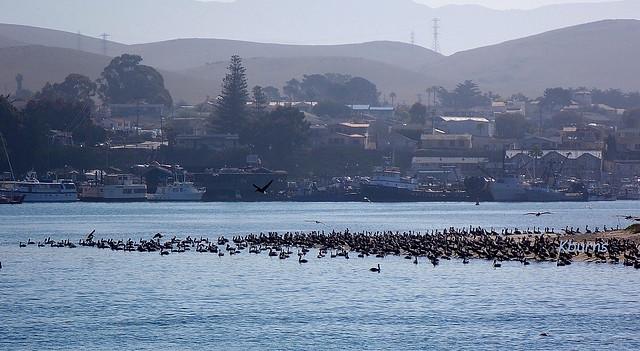 Morro Bay (2)