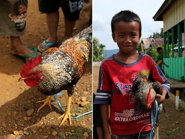 Matano-Ayam