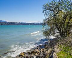 février 2015, Genève, bord du lac