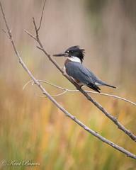 Farmington Bay Bird Refuge