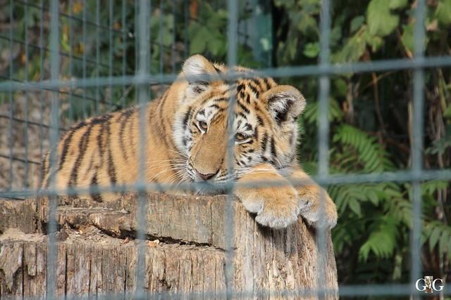 Sonntags-Besuch im Tierpark Friedrichsfelde 04.10.201583