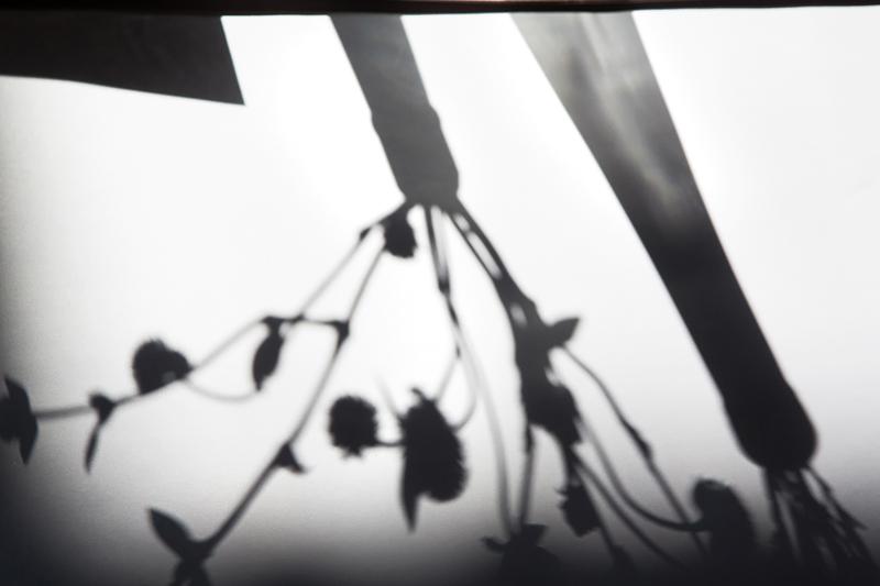 _顏氏牧場,後院婚禮,極光婚紗,海外婚紗,京都婚紗,海外婚禮,草地婚禮,戶外婚禮,旋轉木馬_0021