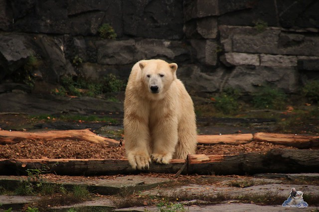 Tierpark Berlin 18.10.2015  010