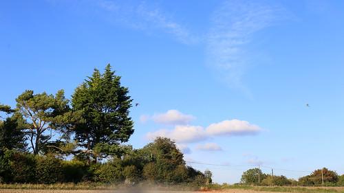 A walk in the autumn sunshine
