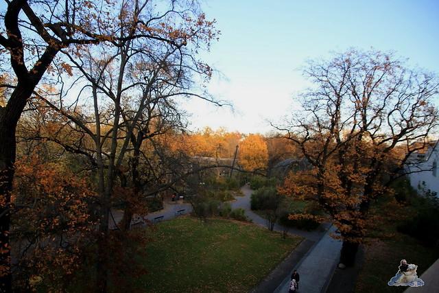 Zoo Berlin 08.11.2015  0170