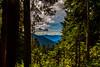 Forest Window