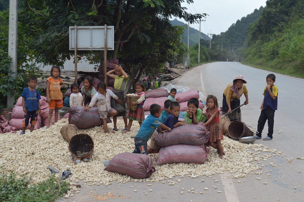 Children and their mothers working with corn in a village in Laos