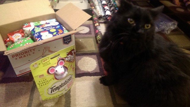 HB was very interested in the treat mouse toy.