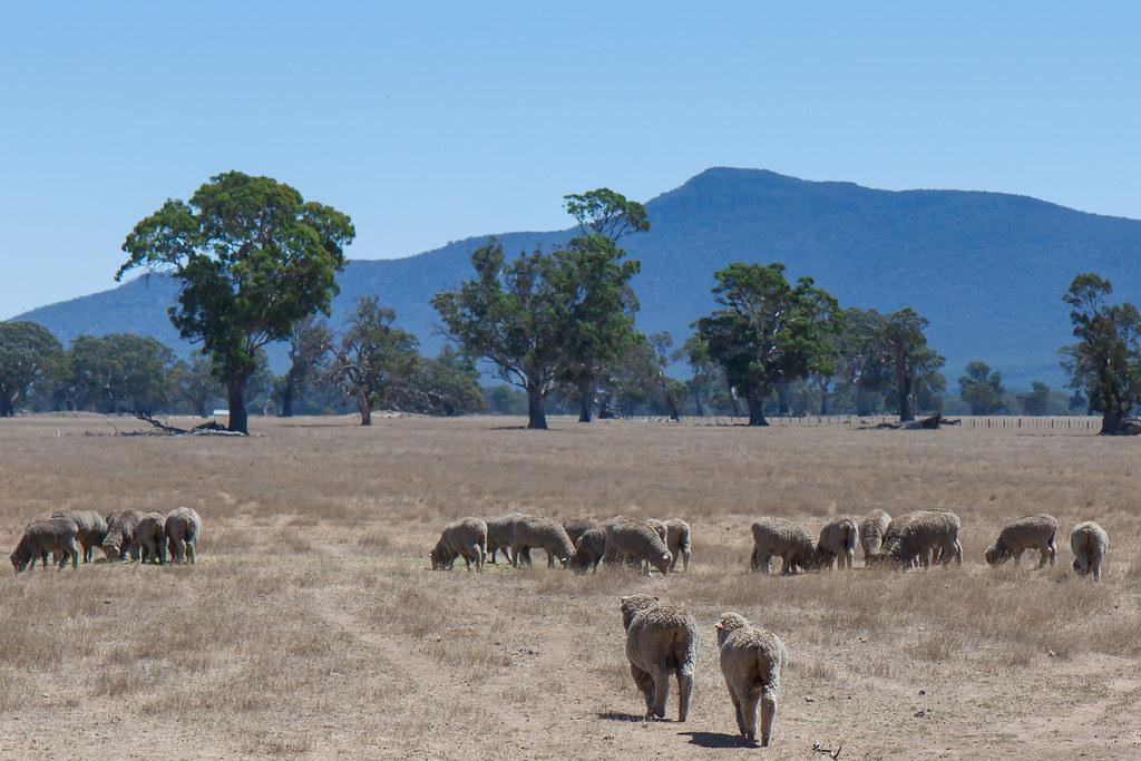 Австралія, Національний парк Гремпіанс