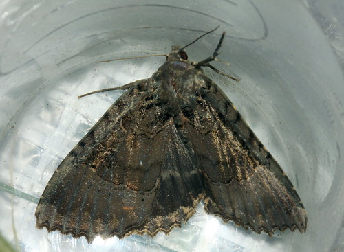 Moth 0203