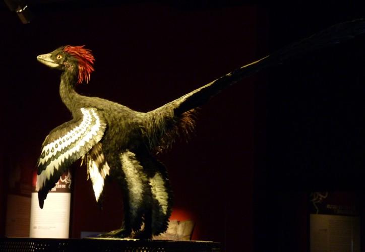 Anchiornis huxleyi 20596982323_3026058255_o