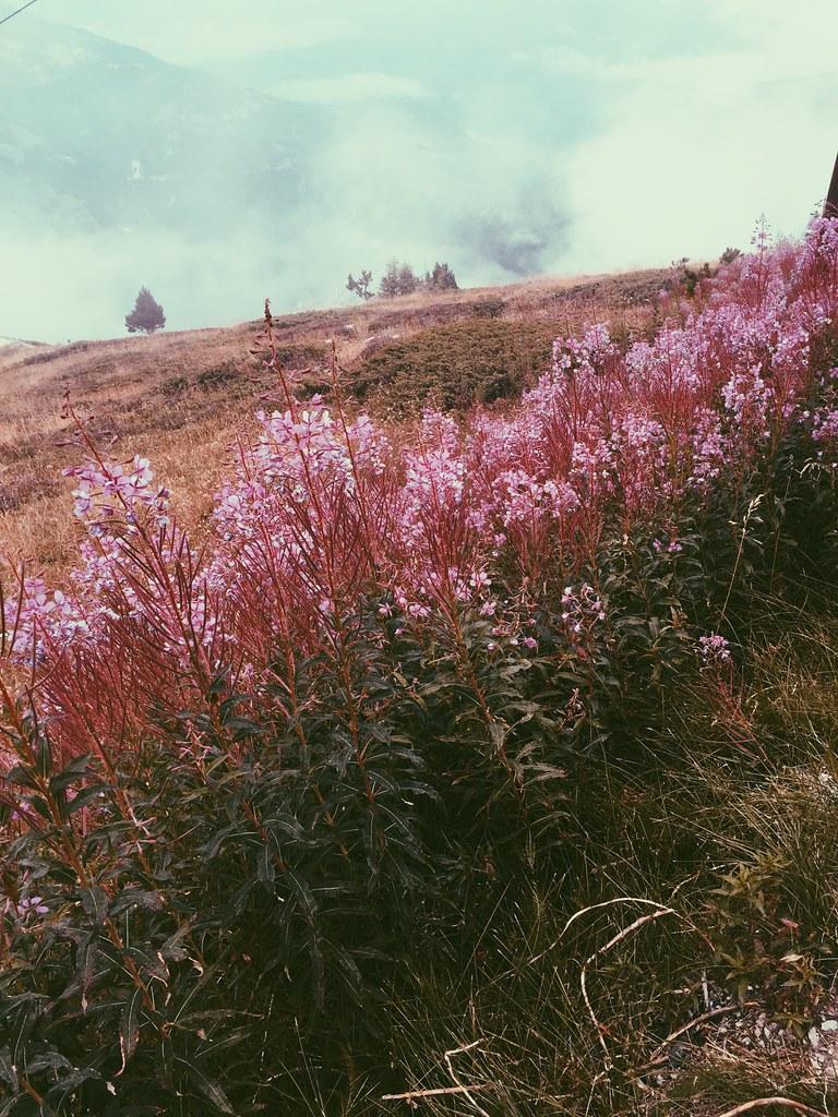 Valais, August 2015