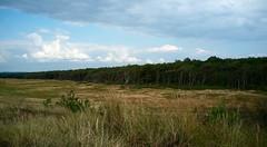 Grassland + Forest