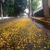 #neve #amarela #primavera #saopaulo #printemps #spring #yellowsnow