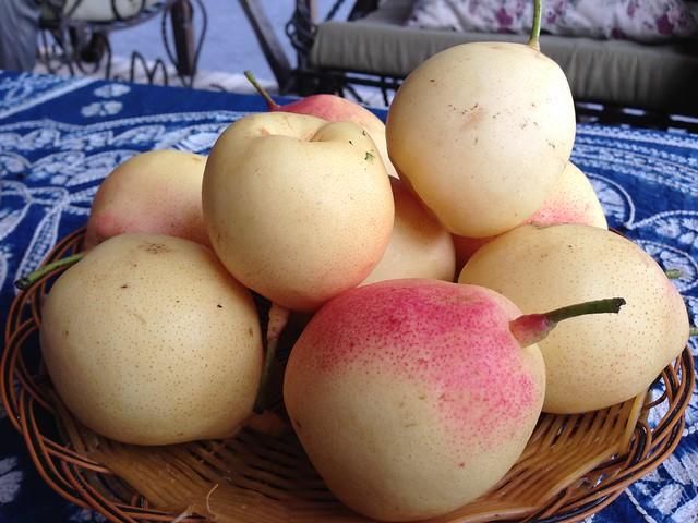 拉市海的多汁梨子。攝影:詹嘉紋。