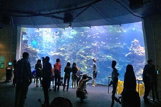 Neighborhood Days - California Academy of Sciences Philippine Coral Reef