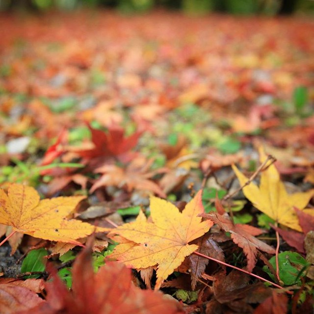 Photo:秋の早い夕暮れとともに #紅葉 🍁の山々から戻って、諸々所用終了。ふらっと半日 #ドライブ 🚗だったけど、なかなか満足度高かった。さすが俺😅 By double-h_by_phone