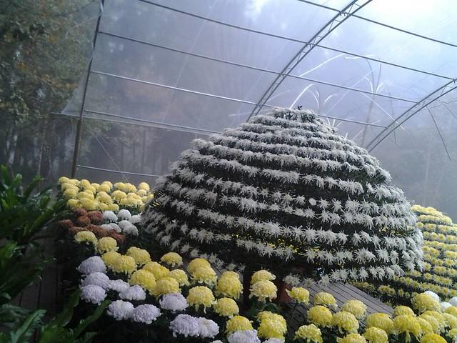 24464霧裡看花
