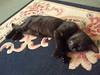 Leeloo having a cat nap.....