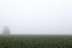 Grosses Moos Seeland