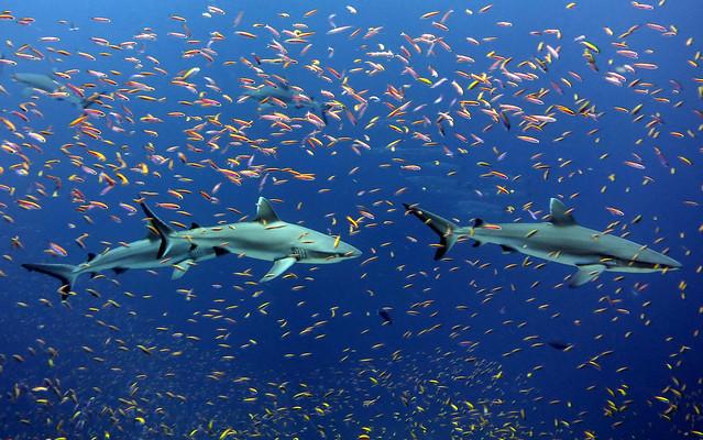photo of sharks