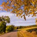 Straight road and yellow leaves of the tree