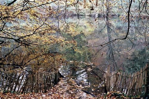 Autumn forest#6